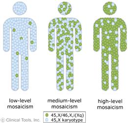 genetic mosaicism - photo #17